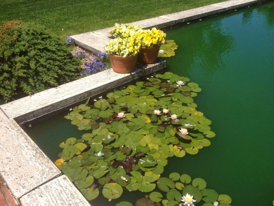 lily pond filoli mansion