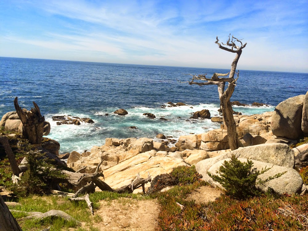 17 mile drive cypress tree