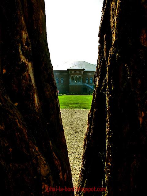 palatul mogosoaia vedere printr-un copac