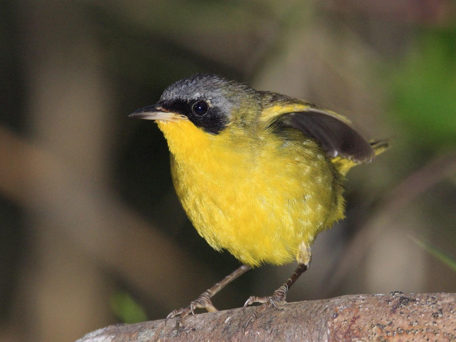 Aves que vi en Brasil