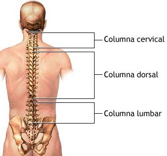 Imagen de la columna vertebral del hombre indicando las columnas que lo comforman
