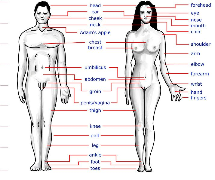 Girls Human Body Parts