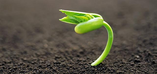 Planta, botanica y biologia