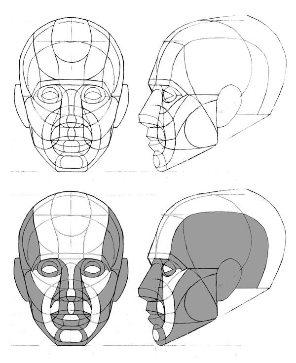 Tania Henderson  Head Diagram