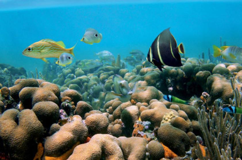 imagem submarina com corais e peixinhos coloridos