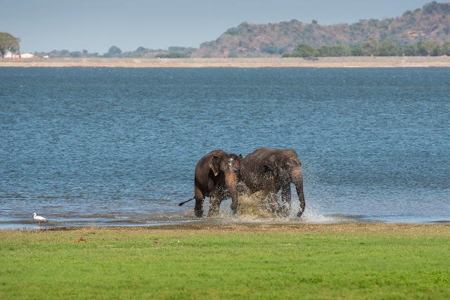 De documentaire wil het probleem van de strijd om leefgebied voor olifanten en burgers onder de aandacht brengen.