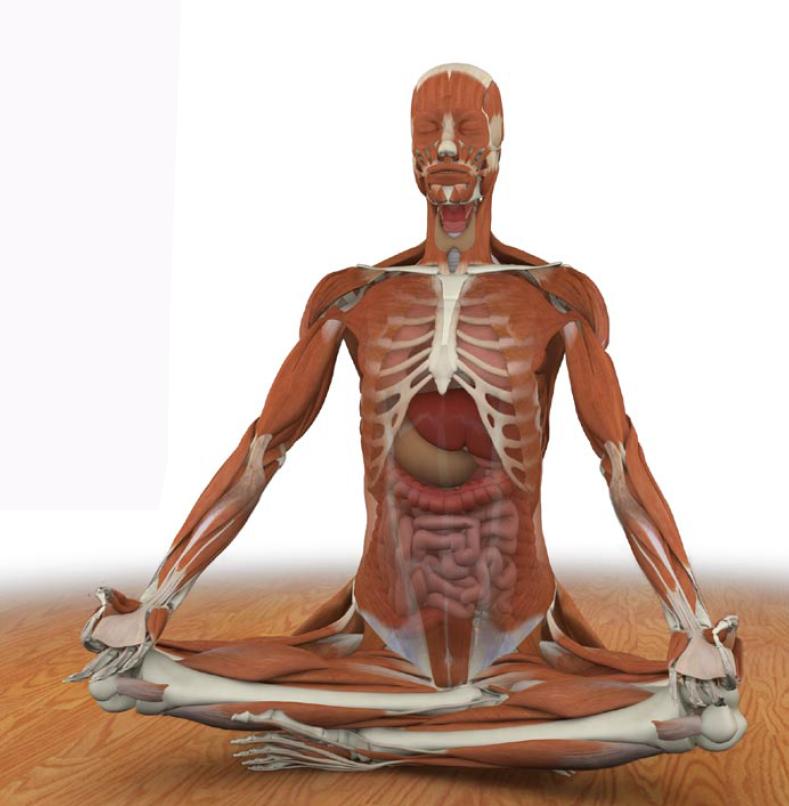 Beneficios del Yoga en nuestro cuerpo físico - El blog de Yoga