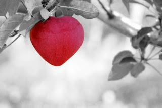 frases lindas de amor, frases de amor cortas