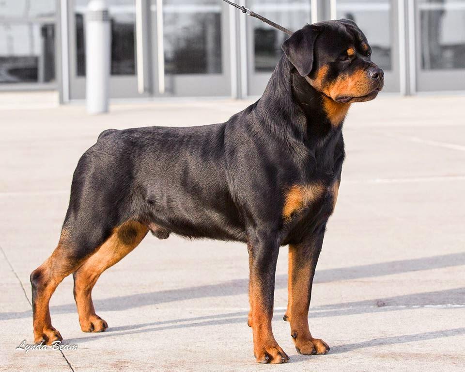 Dog Show Poop Saginaw Valley Kennel Club