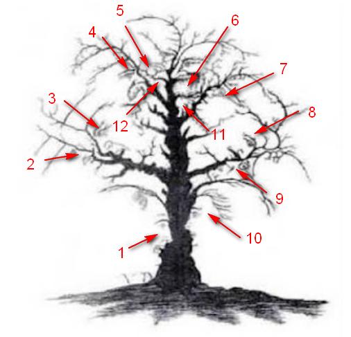 Jawaban Tes Iq Dengan Gambar Karirplus Web Id