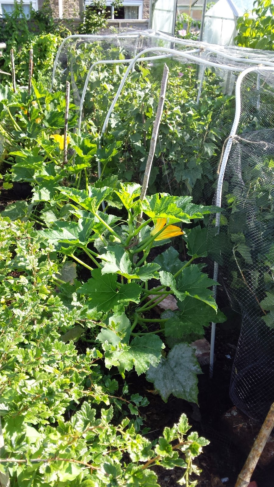 Courgettes and fruit