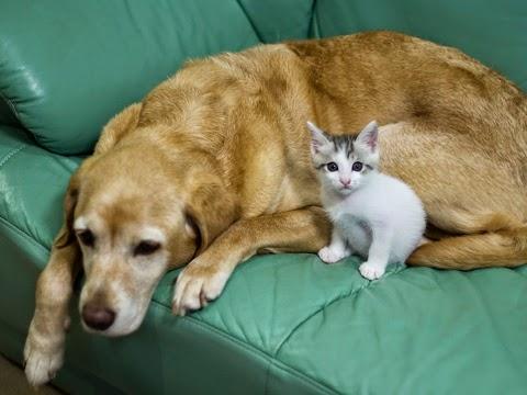 犬と子猫 kitten and dog