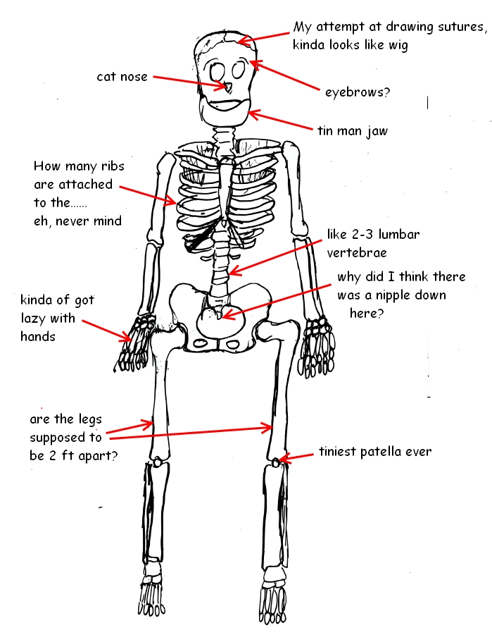 a cartoon guide to becoming a doctor: november 2011, Skeleton