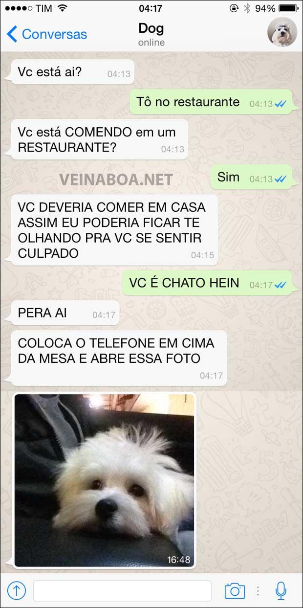 08 Mensagens se meu cachorro tivesse Whatsapp - Gnvision - 2015 - 2016 7