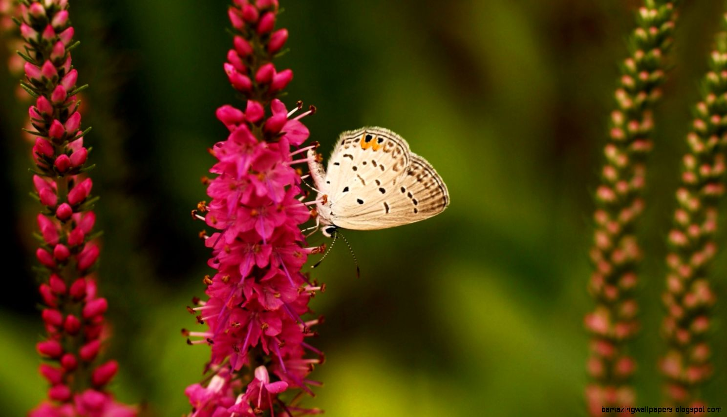 Pretty butterfly nature flowers High Quality and Resolution
