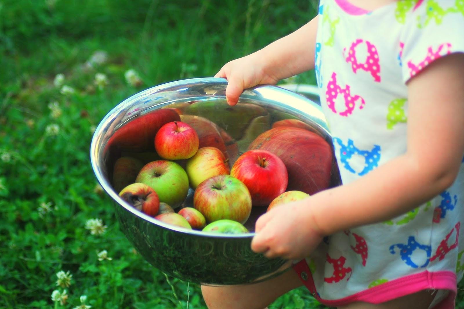 Hiška drobižka: Nabiranje jabolk - na blogu Zelena hiška