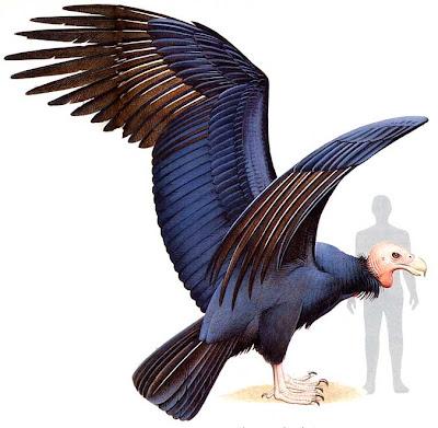 ave gigante de la patagonia Argentavis