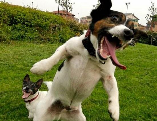 http://3.bp.blogspot.com/-MNNy7460qvg/UEr_uvxDyYI/AAAAAAAAAPQ/Zqi7FQ5Nv6c/s1600/Dog+Funny+Laughing.jpg