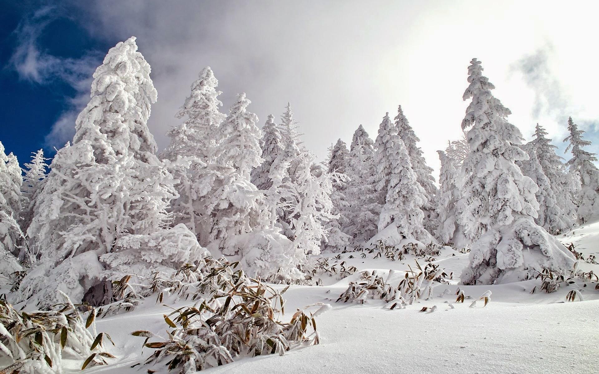 snowfall wallpaper desktop 1080p - photo #19