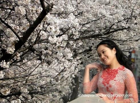 Mc Hồng Phượng ngẩn ngơ trước hoa anh đào Nhật Bản 3