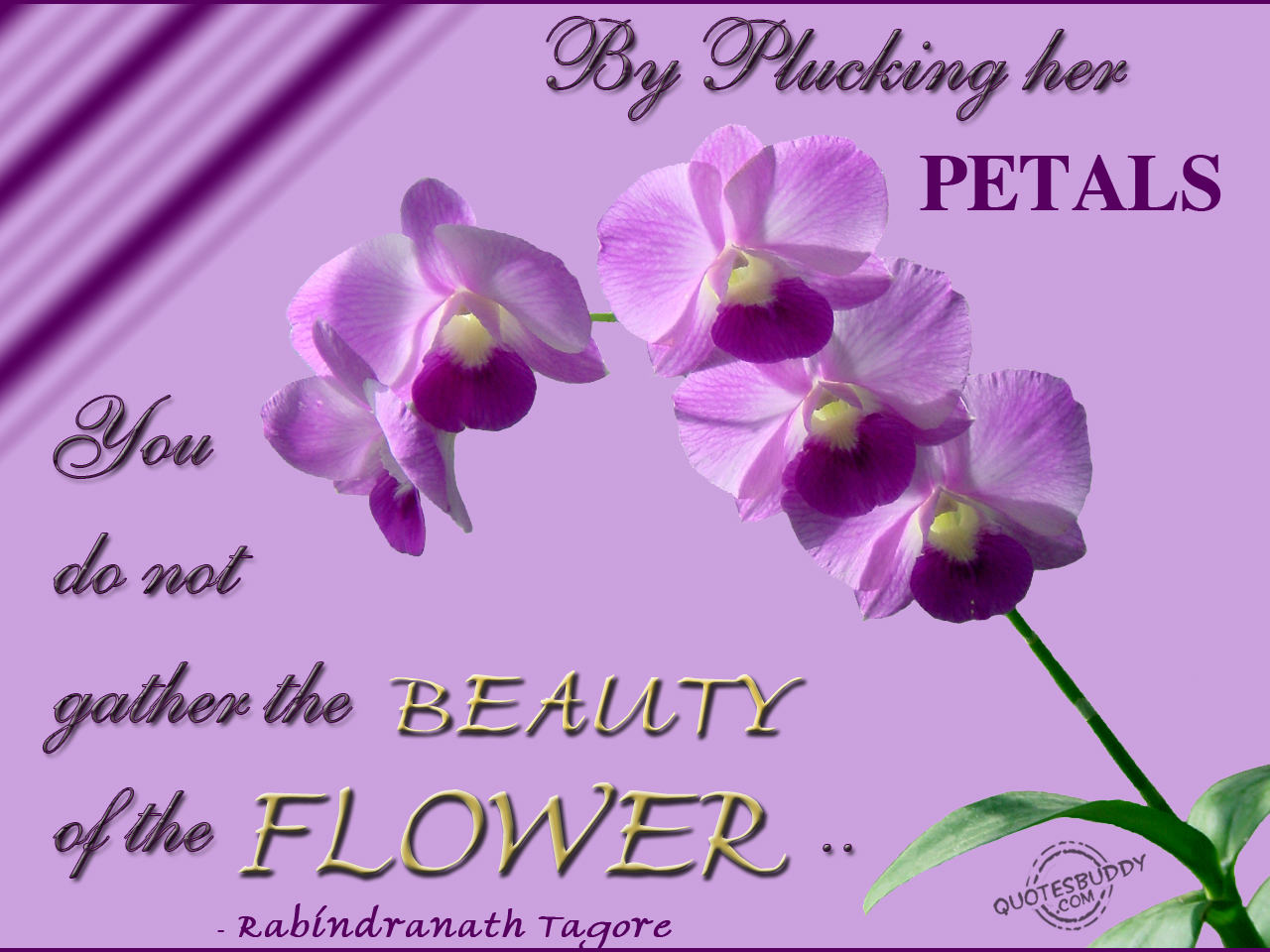 Flowers quotes tree quotes pictures of flowers with quotes quotes from flowers for algernon magazines 241 izmirmasajfo
