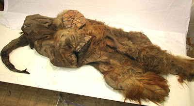 Frozen Mammoth Found in Siberia