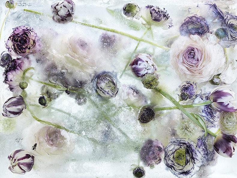 Flores congeladas en cubos de hielo lucen como acuarelas
