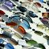 Tips Membeli Kacamata Murah