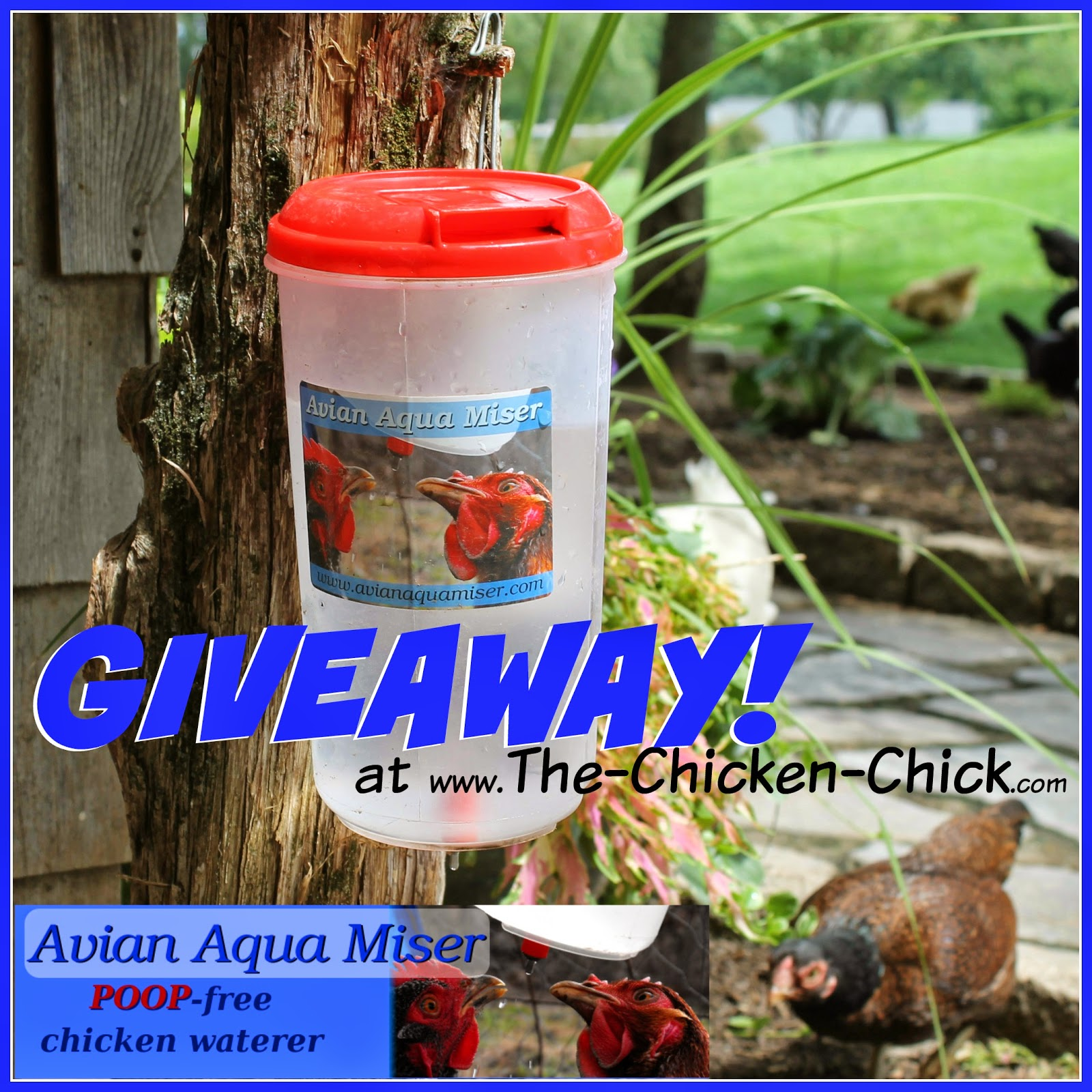 Avian Aqua Miser Original Giveaway at www.The-Chicken-Chick.com