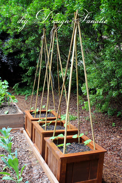 diy Planter Boxes, Growing Green Beans, vegetable garden