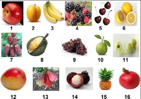 Mis recetas antic ncer los 94 alimentos con demostrado - Semillas de frutas y verduras ...