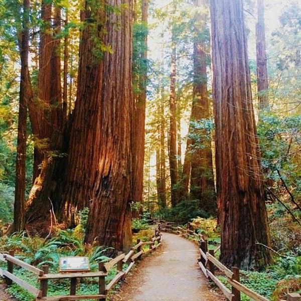 Fluxi // Muir Woods Redwood Forest