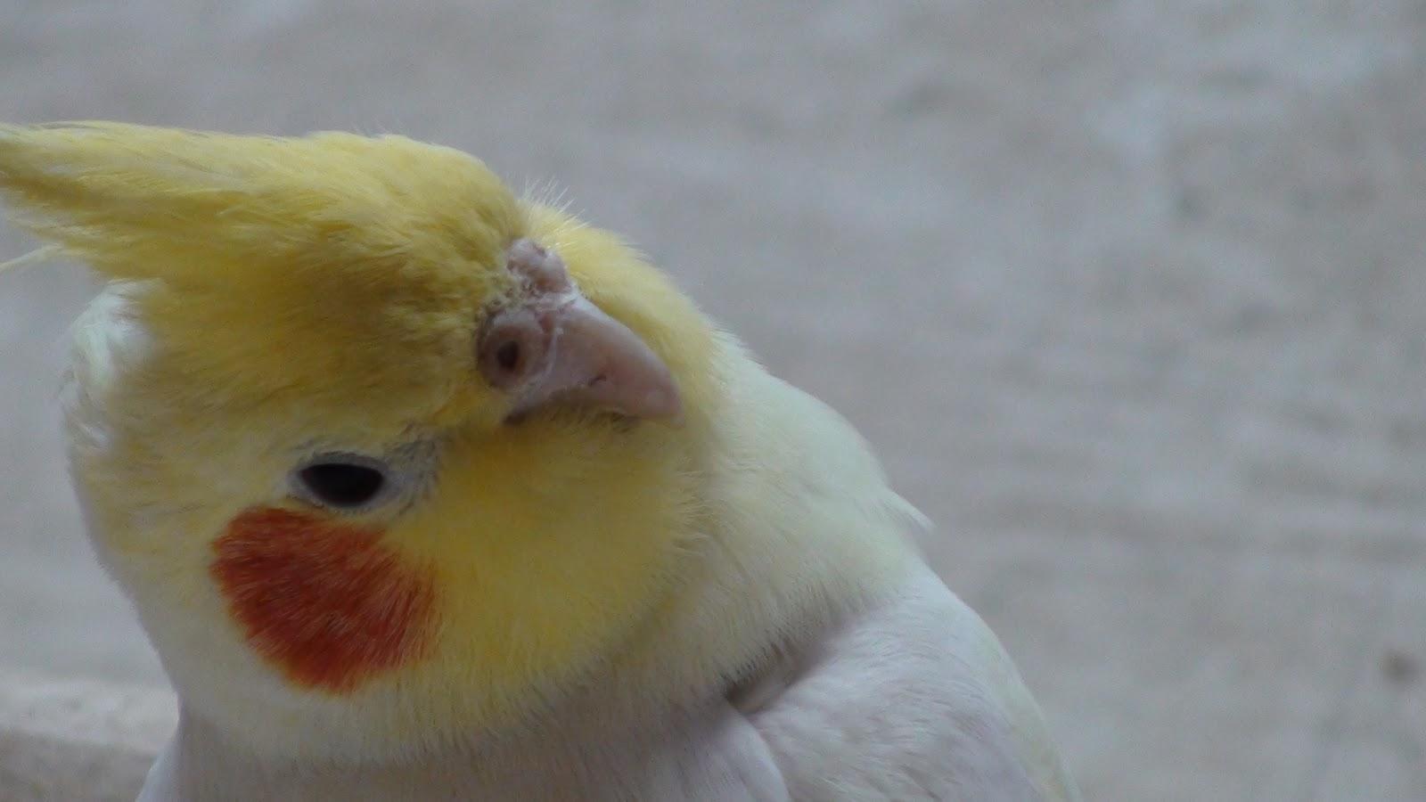 price of exotic pet birds in india