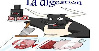 http://cplosangeles.juntaextremadura.net/web/edilim/curso_4/cmedio/la_nutricion/la_digestion/la_digestion.html