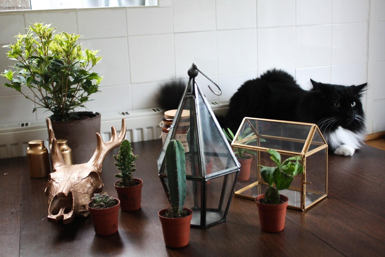 Cactus Terrarium Cityscape Bliss