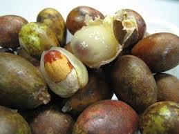khasiat, manfaat, buah. matoa, manfaat buah matoa