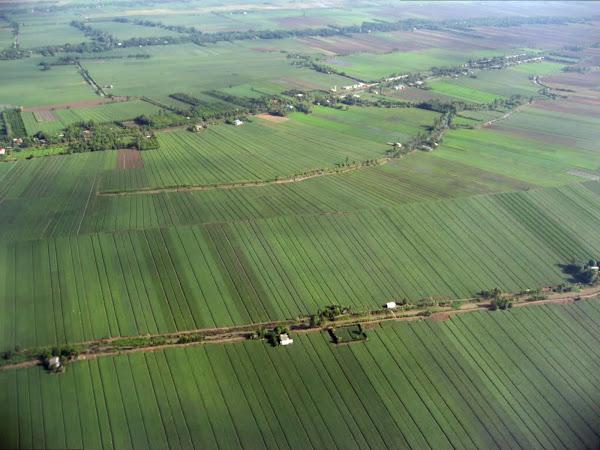 Campos de arroz en Can Tho - Vietnam