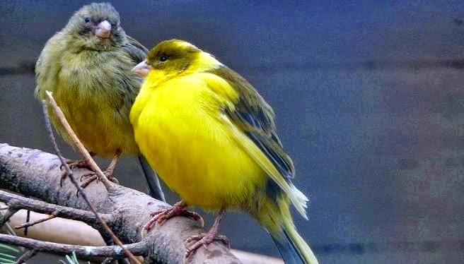 Tips Perawatan Burung di Musim Hujan