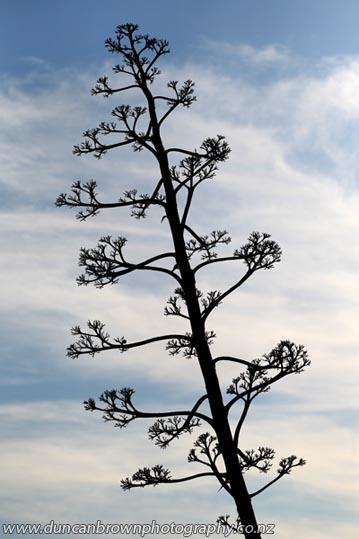 Tall, skinny tree photograph