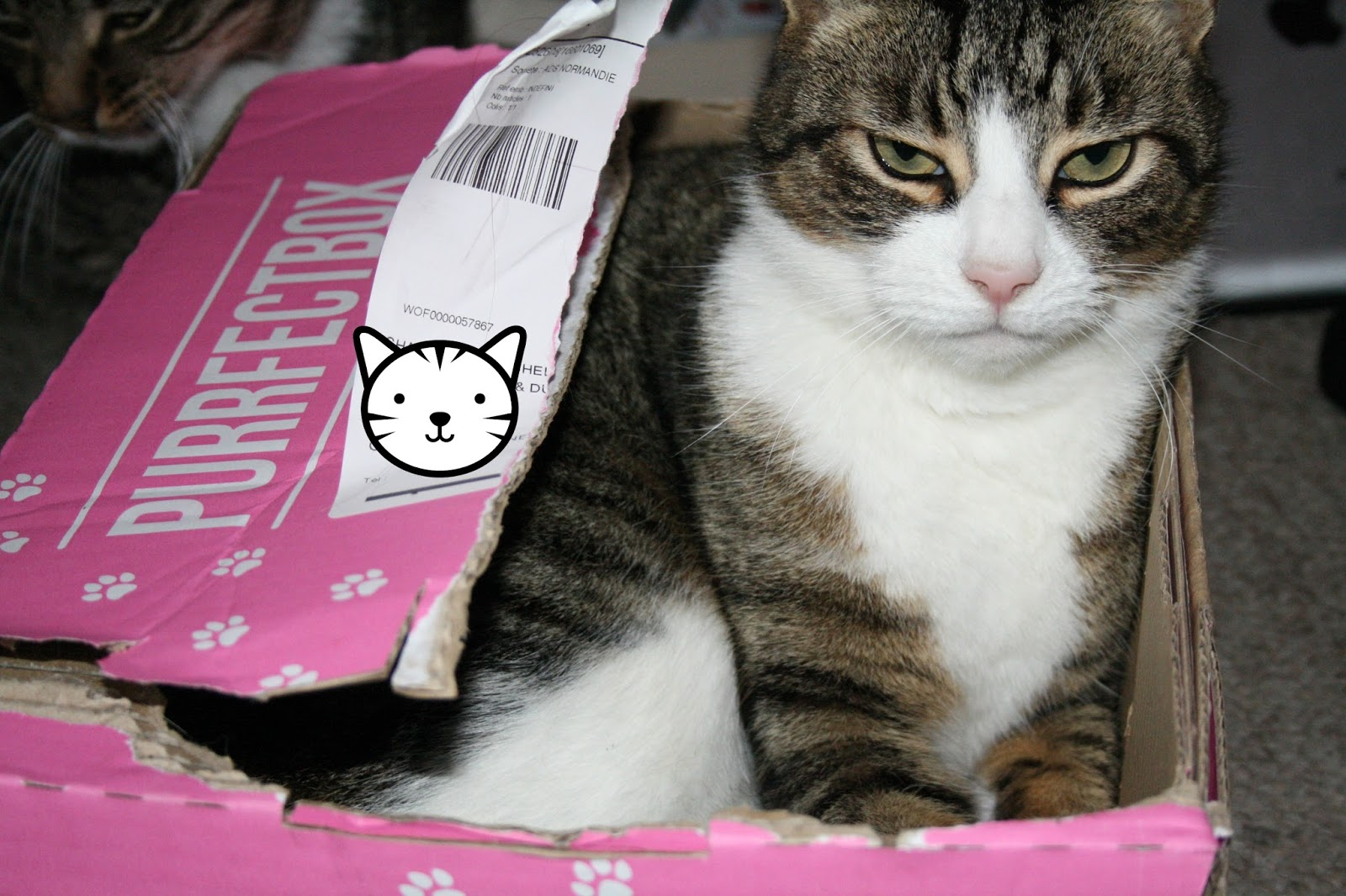 Purrfect_Box for cats