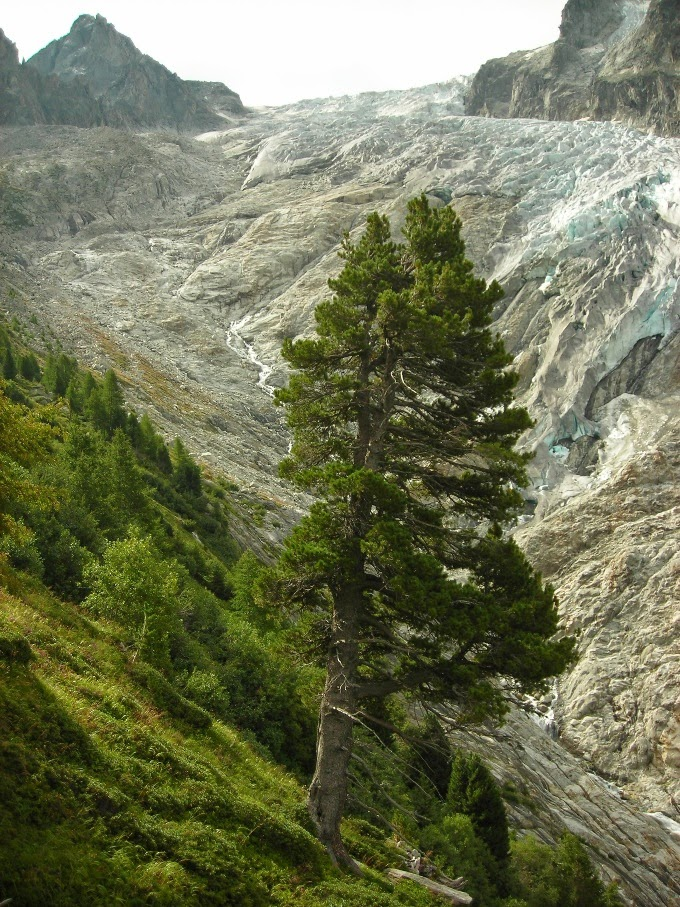 Glaciar-de-Trient-en-Suiza