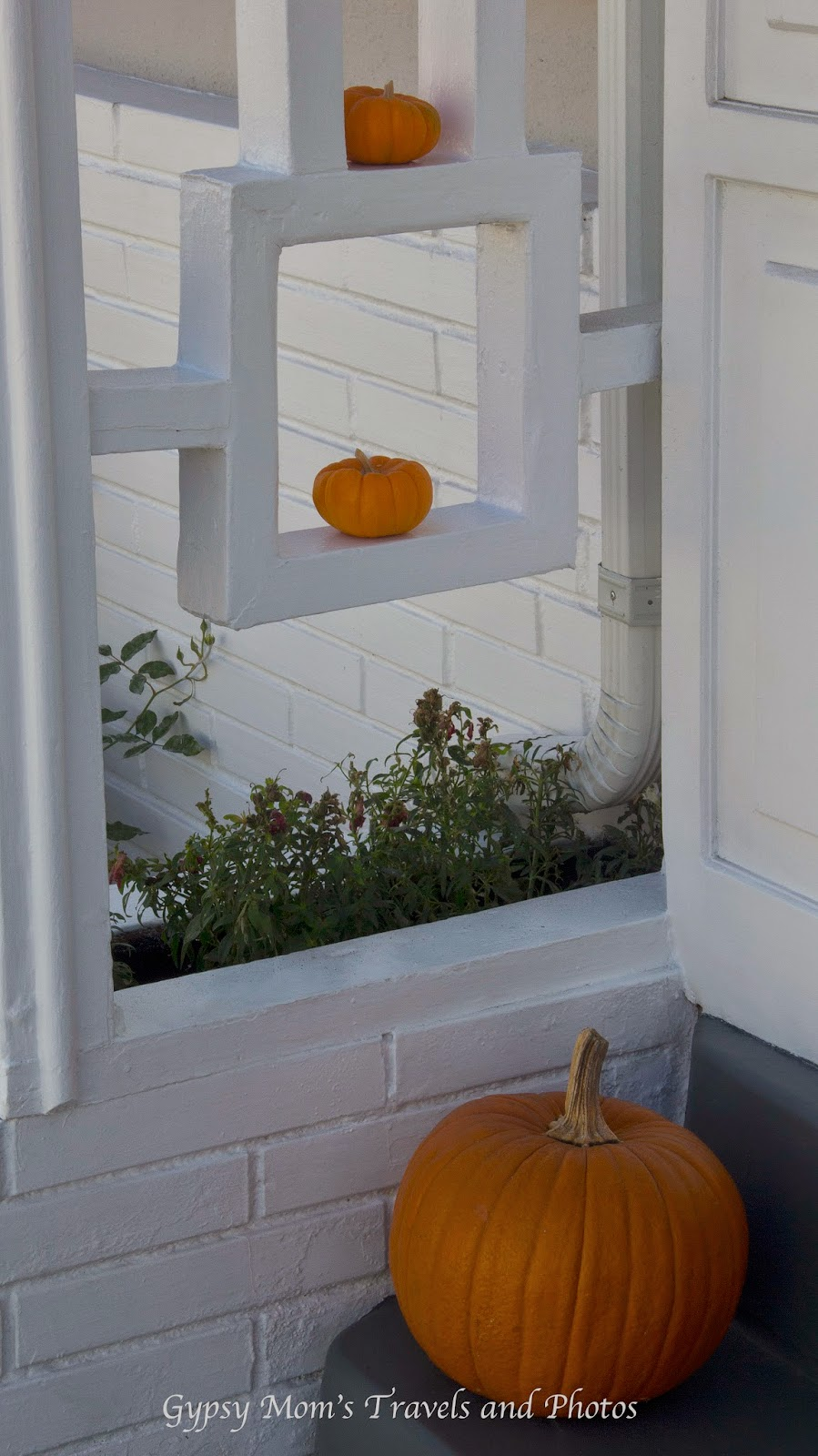 Two small pumpkins on white shelves and one large pumpkin