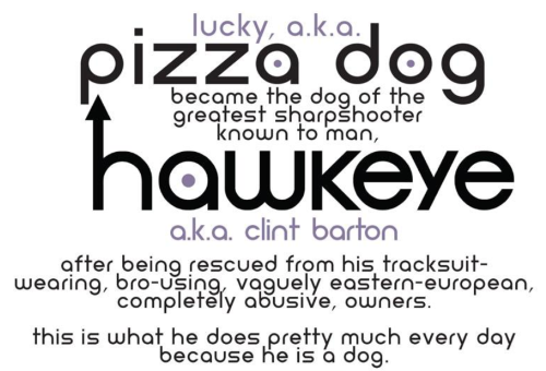 Intro to Hawkeye 11. It reads: lucky, a.k.a. pizza dog became the dog of the greatest sharpshooter known to man, hawkeye a.k.a. clint barton after being rescued from his tracksuit-wearing, bro-using, vaguely eastern-european, completely abusive, owners. this is what he does pretty much every day because he is a dog.