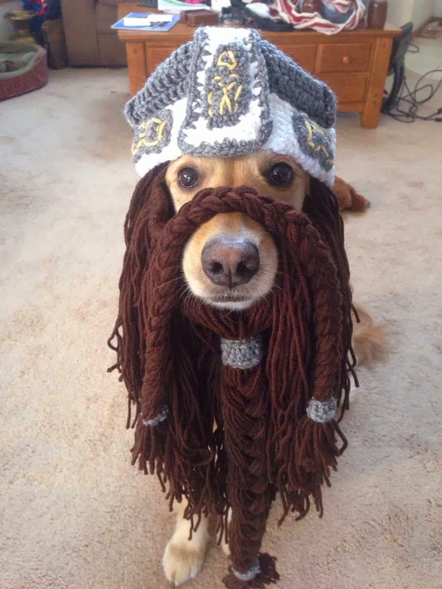 Cute dogs - part 4 (50 pics), dog pictures, dog wears costume