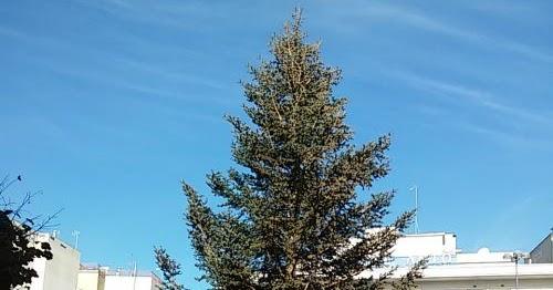 Αποτέλεσμα εικόνας για agriniolike δέντρο πλατεία
