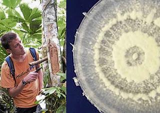 Pestalotiopsis Microspora