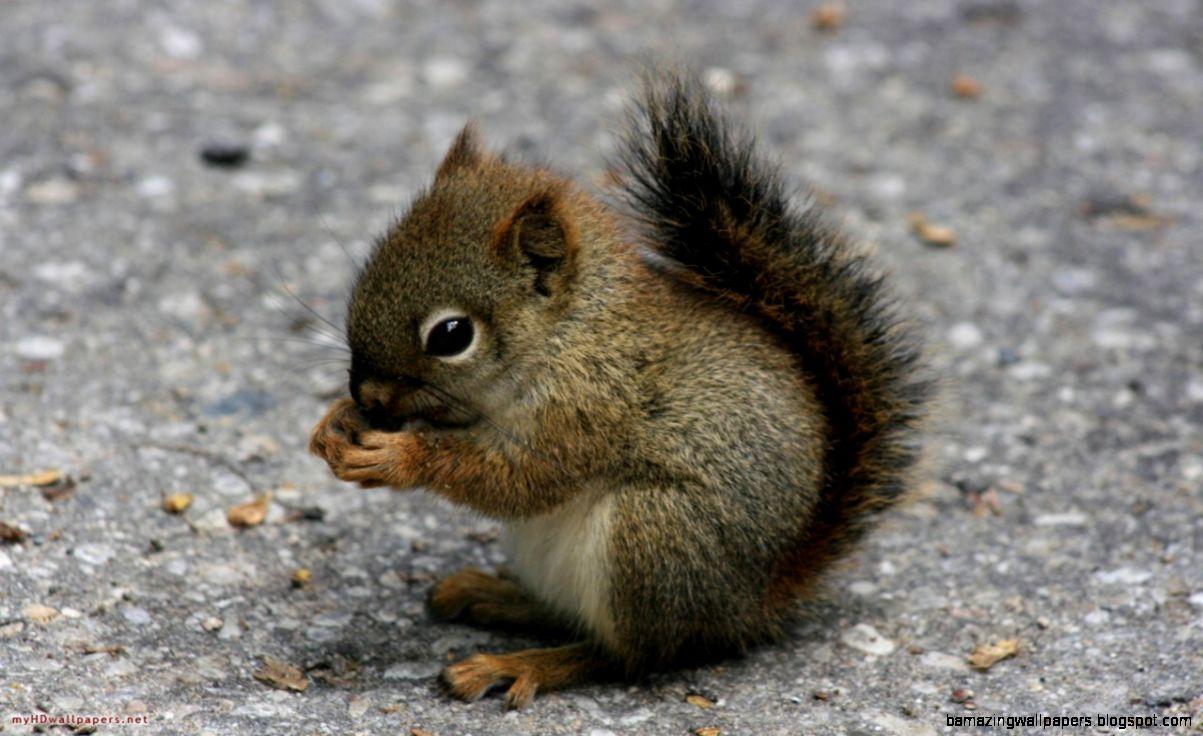 Cutest Wild Baby Animals   Listoid