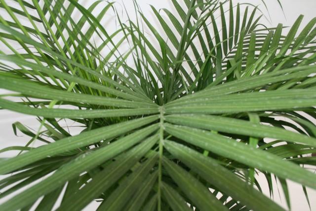 Indoor plants palm 2015 - Indoor plant types ...
