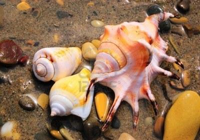 3602624 closeup of three colored sea shells over wet sand تعرف على سبب سماع صوت المحيط في القواقع