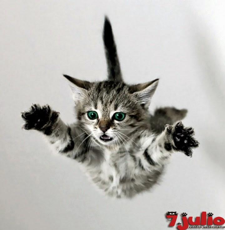 Sindrome del gato paracaidista